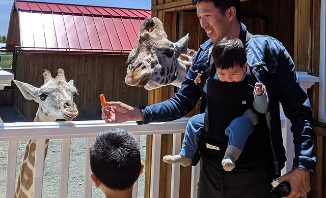 Giraffe-Family-Feeding