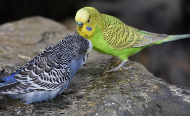 Birdie Landing